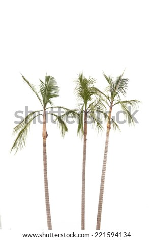 Palm trees  isolated on white background by the seaside - stock photo