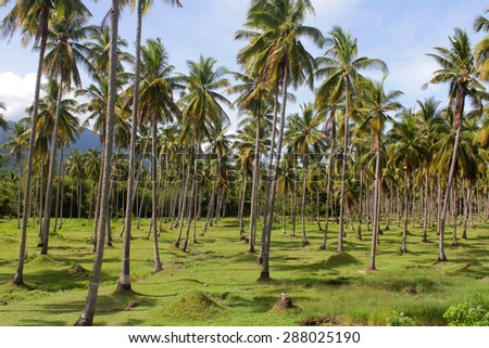 Palm trees jungle full of sunshine, Philippines - stock photo
