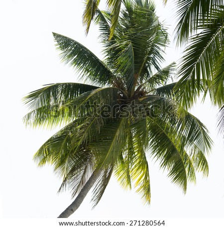 Palm trees leaves on the blue sky background - stock photo