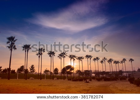 Palm trees lighted by evening sun against sky with clouds. - stock photo