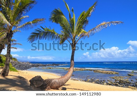 Palm trees line a picture-perfect tropical beach on a fine summer day