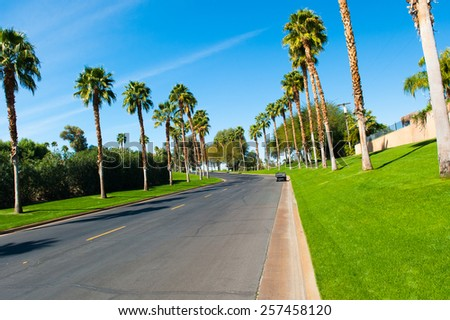 Palm trees line a street in a golf community. - stock photo