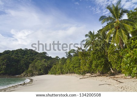 Palm trees line an empty Playa Manuel Antonio in Manuel Antonio National Park, Costa Rica - stock photo