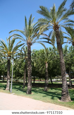 Palm trees lining the path in Valencia