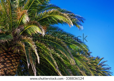 palm trees, location - North Island, New Zealand - stock photo