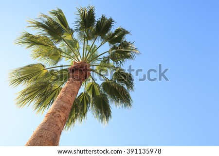 Palm trees low angle view. - stock photo