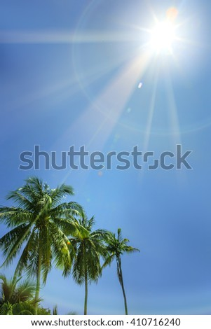 Palm trees, low angle view against blue sky on sun ray tropical nature - stock photo