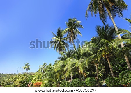Palm trees, low angle view against blue sky on sun ray tropical nature