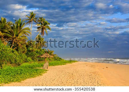 Palm trees near the beach at sunset on Sri lanka - stock photo