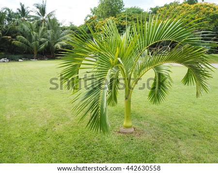 Palm Trees Oasis,Palm trees in the garden,beautiful palm leaves of tree in the park,