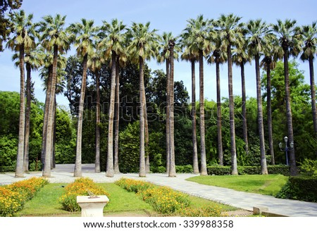 palm trees of the national garden of Athens Greece - stock photo