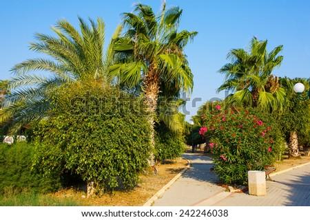 Palm trees, oleander, ficus bush garden tropical park road - stock photo