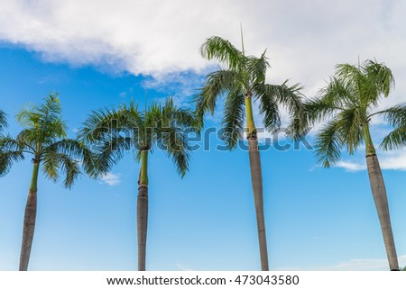 Palm trees on a clear sky.