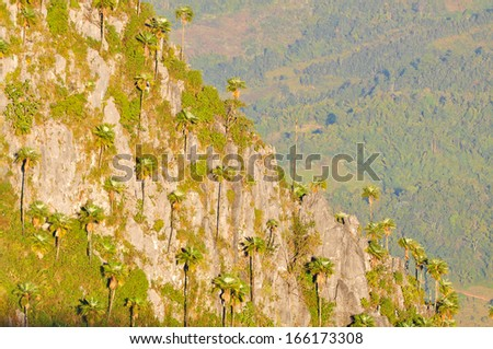 Palm trees on a high cliff. - stock photo