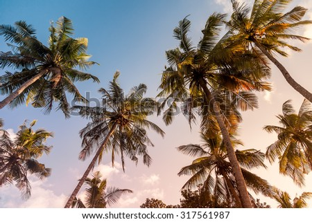 Palm trees on a warm sunny day at sunset, with warm toning