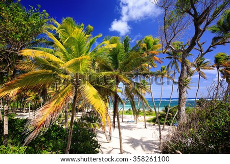 Palm trees on Anse Michel Beach, Cap Chevalier, Martinique, Caribbean  - stock photo