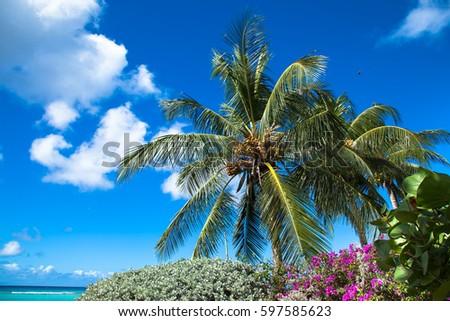 stock-photo-palm-trees-on-background-blu