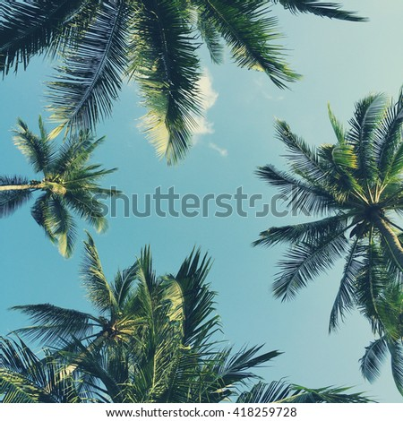 Palm trees on beautiful sky background - stock photo