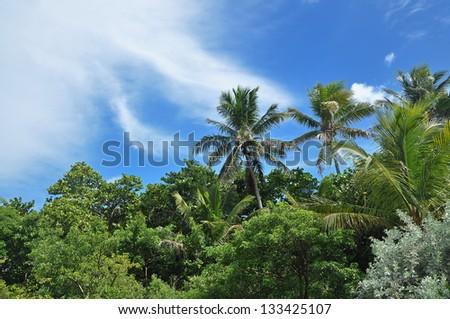 Palm trees on blue sky and white clouds on Bahia Honda beach