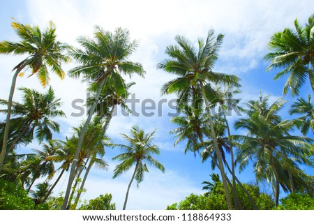 Palm trees on blue sky with white clouds background