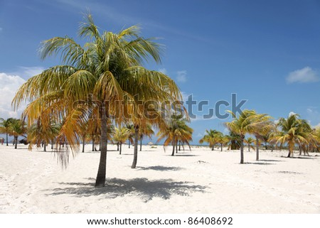 Palm Trees on Caribbean Beach