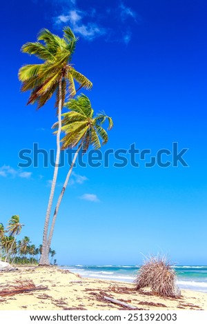 Palm trees on caribbean beach in Dominican Republic