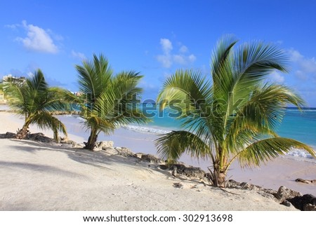 Palm trees on Caribbean beach on Barbados island