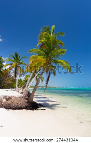 Palm trees on caribbean wild beach, Punta Cana - stock photo