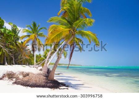 Palm trees on caribbean wild beach, Punta Cana - stock photo