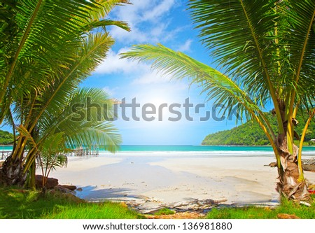 Palm trees on exotic beach - stock photo