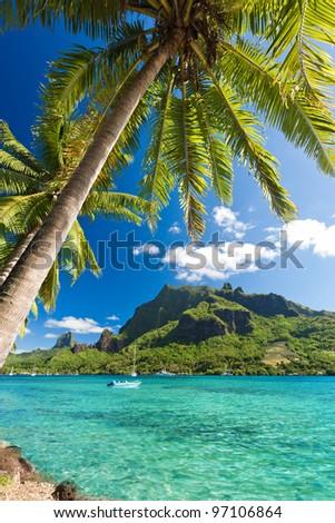 Palm Trees on Shoreline of Ocean at Moorea in Tahiti - stock photo