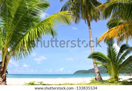 Palm trees on sunny tropical beach - stock photo