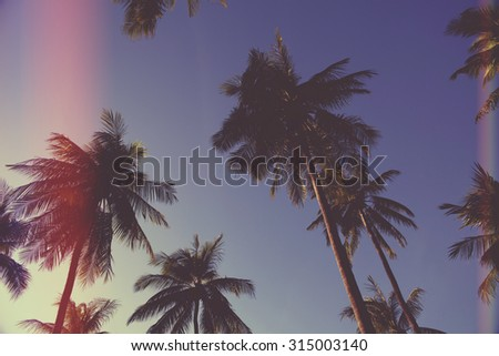 palm trees on the background of a beautiful sunset,light leak filter. - stock photo