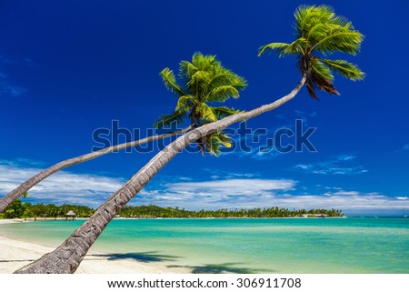 Palm trees on the beach hanging over lagoon on Fiji Islands - stock photo