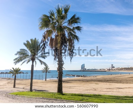 Palm trees on the beach in Barcelona, Spain.  - stock photo