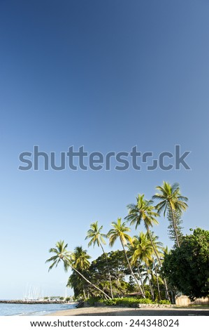 Palm Trees On The Beach With Copyspace - stock photo