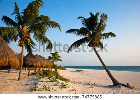 Palm trees on the Caribbean beach