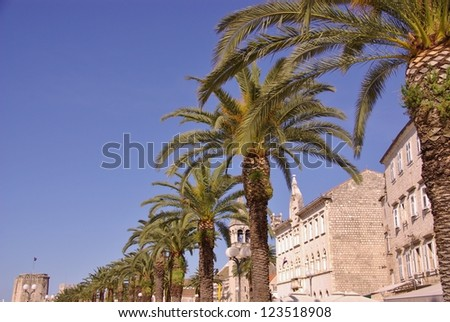 Palm trees on the quay in the historic city Trogir in Croatia - stock photo