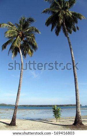 Palm trees on the sand beach Pantai Sorak in Nias, Indonesia