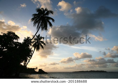 Palm Trees on the sea shore at sunset in the Dominican Republic - stock photo