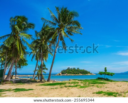 Palm trees on the shore of the sea - stock photo