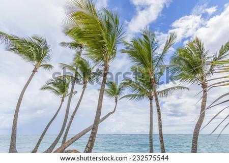 Palm trees on the tropical Caribbean beach. - stock photo