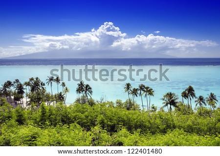 Palm trees on tropical beach in Moorea, Tahiti, French Polynesia - stock photo