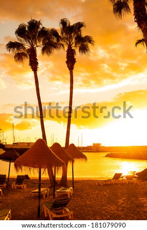 Palm Trees on Tropical Beach with Deck Chairs and parasols - stock photo