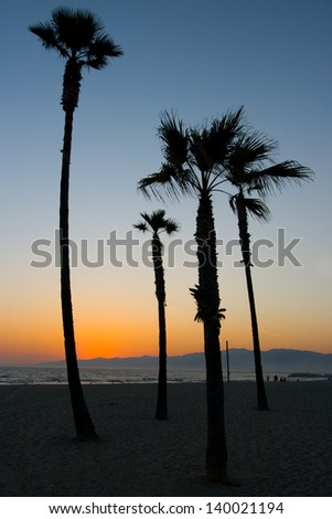 Palm trees on Venice Beach at sunset on a warm day in Los Angeles, California, USA - stock photo