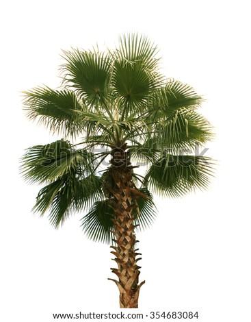 Palm trees on white - stock photo