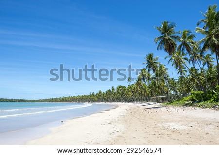 Palm trees on wide remote tropical Brazilian island beach in Bahia Brazil - stock photo