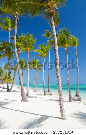 Palm trees on windy tropical beach. Famous tourist resort in Dominican Republic. - stock photo