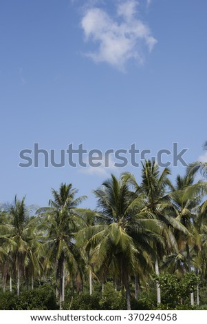 Palm trees set against clear blue skies.