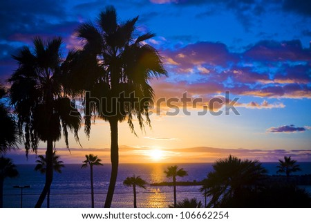 Palm trees silhouette at sunset, Gran Canaria, Spain - stock photo